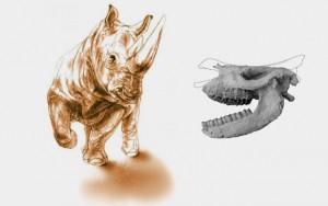 В Турции палеонтологи нашли череп доисторического носорога в вулканическом пепле