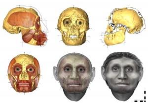 Восстановленное лицо хоббита с Флореса имеет человеческие черты