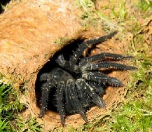Новые виды норных пауков будут носить имена знаменитостей