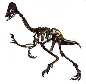 Овираптор - род ящеротазовых динозавров подотряда тероподов