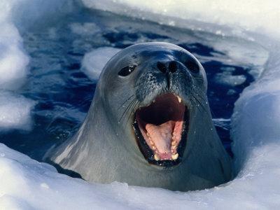 Океан вокруг Антарктиды стремительно опресняется