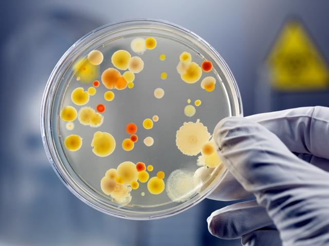 "Китайцы придумали ""соус"" от бактерий"