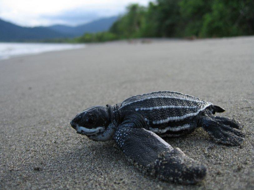 Черепахи находятся под угрозой исчезновения