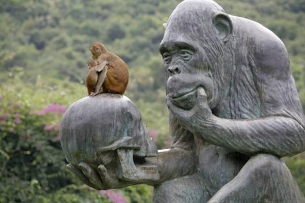 Почему макаки не говорят?