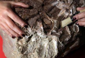 Ученые, возможно, открыли самые старые свидетельства жизни на планете