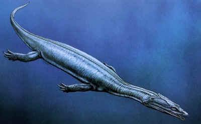 Обнаруженные отпечатки нотозавров в Китае позволили разгадать еще одну загадку