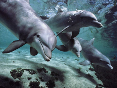 дельфины общаются друг с другом целыми предложениями