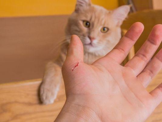 Ваша кошка может быть опасной