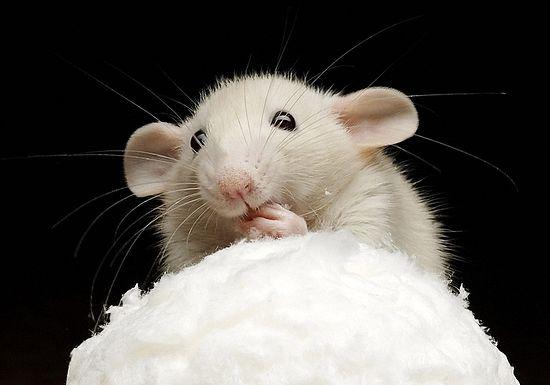 Мыши делают что-то очень сложное и умное