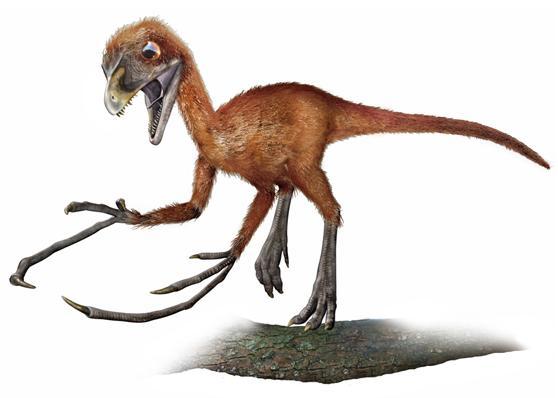 Палеонтолог обнаружил в янтаре хвост детеныша динозавра