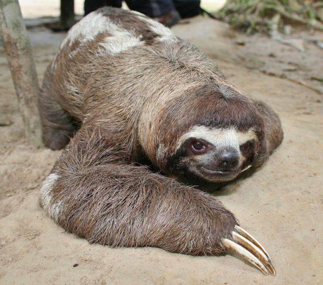 Таинственные тоннели в Южной Америке были вырыты гигантскими ленивцами