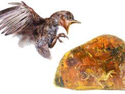 Птенец, которому 99 миллионов лет сохранился в янтаре